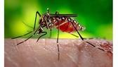Brazil công bố chấm dứt tình trạng khẩn cấp về Zika