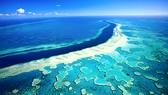 Rạn san hô Great Barrier lại bị đe dọa