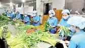 Chế biến rau VietGAP tại Hợp tác xã Phước An, TPHCM. Ảnh: Thành Trí