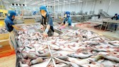 Quản lý nuôi, chế biến và xuất khẩu sản phẩm cá tra cũng sẽ có hiệu lực từ ngày 1-7-2017
