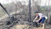 Rừng thông ở xã Đắk Long, huyện Kon Plông, tỉnh Kon Tum bị triệt hạ để giao cho doanh nghiệp trồng mắc ca  