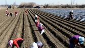 Đất canh tác Hàn Quốc sụt giảm