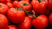 Vị Umami có mặt phổ biến ở các loại thực phẩm tự nhiên. Có thể dễ dàng cảm nhận vị umami đặc trưng khi ăn một quả cà chua tươi.
