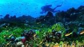 Tìm giải pháp mới đảo ngược tác động tiêu cực với đại dương