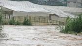 Nước từ thượng nguồn đổ về suối Cam Ly không thoát kịp gây ngập nhà kính ven suối. Ảnh: ĐOÀN KIÊN