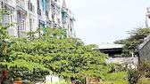 Lực lượng TNXP thành phố sử dụng nhà, đất, góp vốn không hiệu quả
