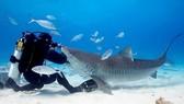 Phát minh đồ lặn giảm chấn thương