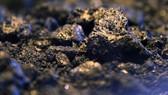 G20 vẫn đầu tư lớn vào nhiên liệu hóa thạch