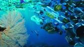 Rác thải nhựa đổ xuống biển tăng cao