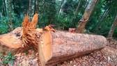 Tạm giữ 5 đối tượng phá rừng