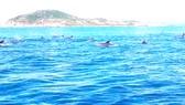 Đàn cá heo xuất hiện tại vùng biển gần bờ thuộc xã An Hòa Hải, huyện Tuy An (Phú Yên)