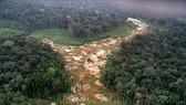 Khoảng rừng Amazon bị chặt phá tại Brazil. Ảnh: AFP/TTXVN