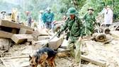 Bộ đội Biên phòng sử dụng  chó nghiệp vụ tìm kiếm nạn nhân ở hiện trường sạt lở thôn 1,  xã Trà Leng, huyện Nam Trà My, tỉnh Quảng Nam Ảnh: NGUYỄN CƯỜNG