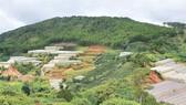 """Nhà kính mọc lên khắp nơi """"gặm nhấm"""" đất rừng ở Lâm Đồng"""