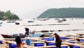Thủ phủ tôm hùm Sông Cầu (tỉnh Phú Yên) bắt đầu hồi sinh sau bão lũ