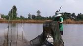 ĐBSCL: Nước lũ về nhưng thủy sản còn ít