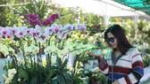 Int'l bonsai & flower exhibition opens in Dalat