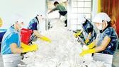 Sản xuất cơm dừa nạo sấy tại Công ty xuất nhập khẩu Bến Tre