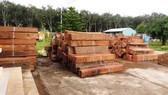 Bắt giữ ô tô chở gỗ lậu quý hiếm ở Khánh Hòa