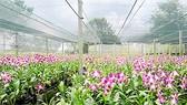 Kinh nghiệm quý của bà chủ vườn lan 1.000m²