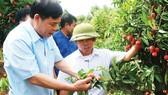 Lãnh đạo Bộ NN-PTNT đến tận vườn vải thiều ở Bắc Giang để hỗ trợ nông dân và doanh nghiệp xuất khẩu