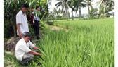 Một mô hình trồng lúa thông minh