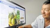 Người tiêu dùng có thể chọn mua nông sản trên mạng. Ảnh: CAO THĂNG