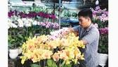Chủ tiệm hoa lan trên đường Phạm Văn Đồng, quận Thủ Đức đang chăm sóc hoa bán tết