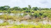 Hiện trạng sau 15 năm triển khai dự án khu nhà ở thuộc KKTCK Mộc Bài, Tây Ninh. Ảnh: MINH TUẤN