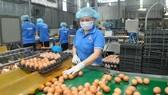 Doanh nghiệp tại TPHCM chế biến nguồn trứng gia cầm từ ĐBSCL, cung ứng bình ổn thị trường. Ảnh: CAO THĂNG