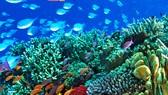 Rạn san hô Barrier Reef