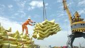 Chính phủ yêu cầu triển khai có hiệu quả Đề án thương hiệu gạo Việt Nam và Chiến lược phát triển thị trường xuất khẩu gạo (Ảnh minh họa)