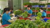 Công nhân HTX Nông nghiệp Tuấn Ngọc (quận 9) sơ chế rau trước khi chở đến nơi tiêu thụ
