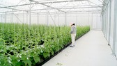 Nâng cao hiệu quả hoạt động của công ty nông, lâm nghiệp