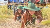 """Hàng trăm """"nông dân nhí"""" ướt đẫm mồ hôi... gặt lúa"""