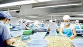 Hỗ trợ nâng cao chất lượng điều thô Mozambique