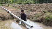 Bơm nước ngọt từ ngoài kênh vào mương vườn dự trữ tưới cho cây. Ảnh: TTXVN