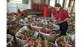 Tìm thị trường tiêu thụ nông - thủy sản