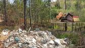 Đổ rác vào rừng