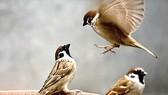 Chú chim non lạc mẹ