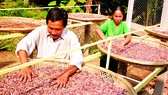 Xuất khẩu nông sản vào thị trường Mỹ: Tận dụng tốt vai trò doanh nghiệp kiều bào
