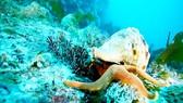Những sinh vật biển đã di chuyển về phía Bắc để sinh sống