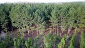 Sau 3 tháng, trồng mới 31.497ha rừng
