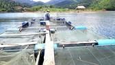 Nghệ An: Người dân tạo sinh kế trong lòng hồ thủy điện