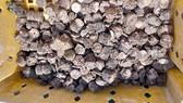 Quảng Bình: Phát hiện 770kg tiền cổ thời Gia Long - Minh Mạng