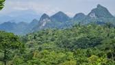 Xây dựng hệ thống quản lý rừng bền vững