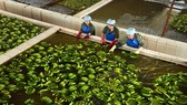 Nâng chất để trái cây Việt vươn xa