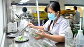 Tạo giống cây con mới tại Trung tâm Công nghệ sinh học TPHCM ở quận 12 Ảnh: CAO THĂNG