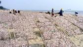 Đầu năm, ngư dân trúng mùa cá cơm