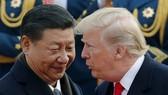 Chủ tịch Trung Quốc Tập Cận Bình và Tổng thống Mỹ Donald Trump. (Nguồn: AP)